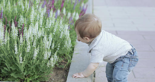 A child near a flower bed Footage