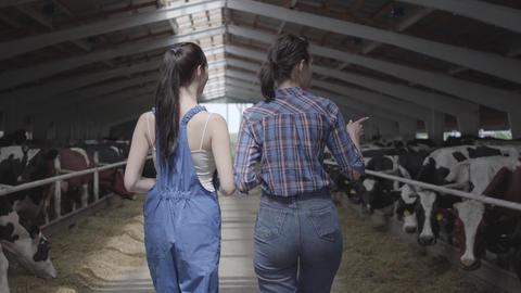 Young girls farmers making a tour of the barn with cows on the farm. Girl farmer Live Action