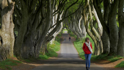 The Dark Hedges - a famous location in Northern Ireland Footage