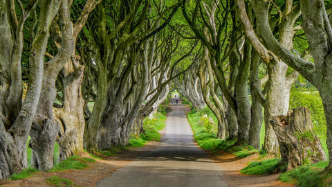The Dark Hedges - a famous location in Northern Ireland Live Action