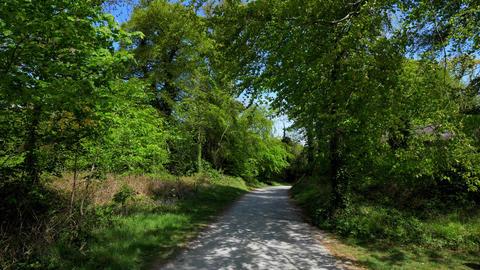 Beautiful nature around Castle Ward in Northern Ireland Footage