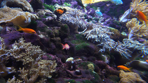 Fish and coral Footage