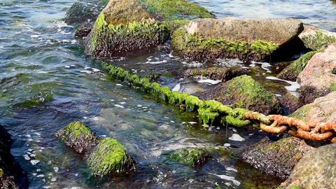 rusty ship chain lies on stones and falls into the sea Acción en vivo