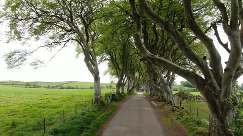 Dark Hedges of Stranocum in North Ireland Live Action