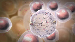 Medical Animation of Cell Renewal Footage