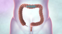 Internal organs and human defecation system. Medical animation of large intestin Footage