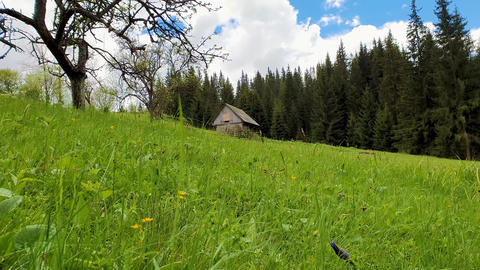 Wooden cottage in the mountains, sunny spring day with green grass and flowering meadow Footage