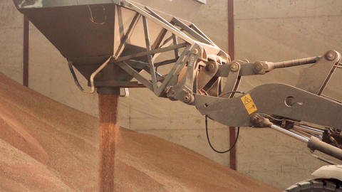 Excavator loader bucket loading grain, close up. Big heap of grain in a Footage