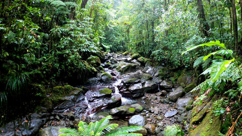 Small stream and rocks in Basse Terre jungle in Guadeloupe, Lesser Antilles Live Action