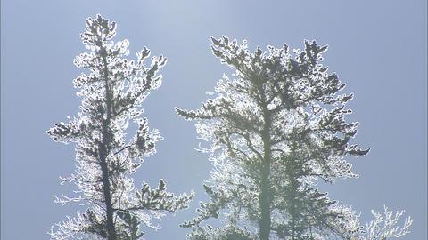 樹氷 ライブ動画