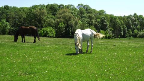 Horses On Grassland Spring Solar Weather Footage