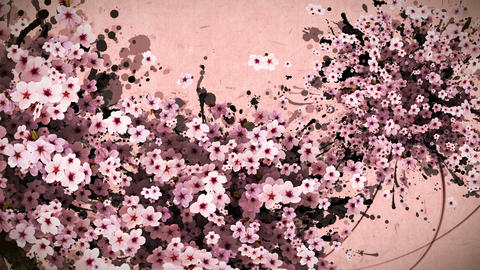 cherry blossom and ink paint strokes pink paper texture background CG動画