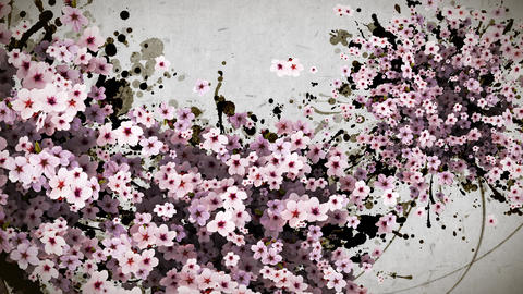 cherry blossom and ink paint strokes paper texture background CG動画