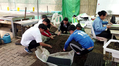 Mae Saiong. Thailand - 2019-03-11 - Volunteers Fill Greenhouse Flower Beds With Footage