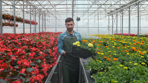 Worker walking in a flowerpot. Agricultural engineer working in greenhouse Footage