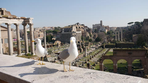 Seagulls in Rome with ancient architecture in background Footage