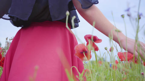 Female hand running through poppies field. Girl's hand touching red poppy Live Action