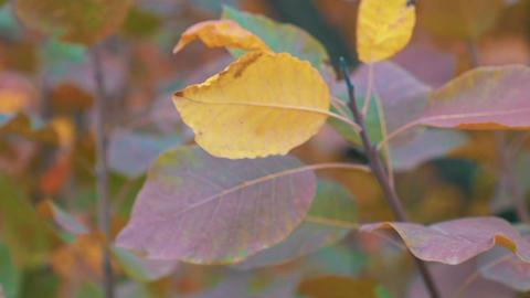 Slow Motion Trees On The Wind, Autumn Season Footage