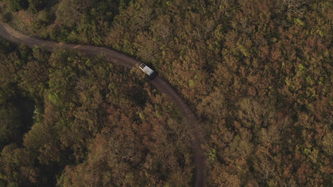 Tourist transport goes on winding dirt road through the forest and bushes Footage