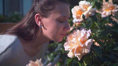 A woman gently touches and sniffs peach roses. A beautiful woman and huge peach Footage