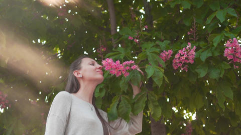 A woman gently touches and sniffs pink chestnut. A beautiful woman and huge pink Footage