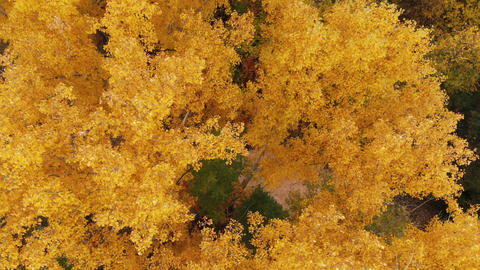Autumn Park. Flying over the colorful treetops on a sunny day. Autumn trees in Live Action