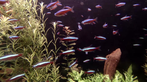 Sea life in aquarium 2 Stock Video Footage
