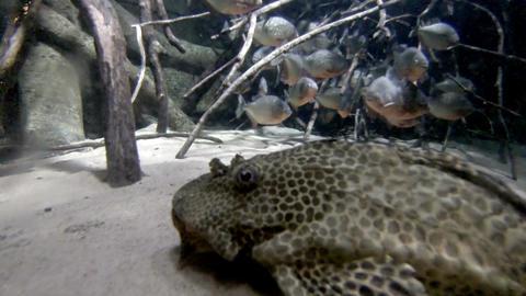 Sea life in aquarium 6 Stock Video Footage