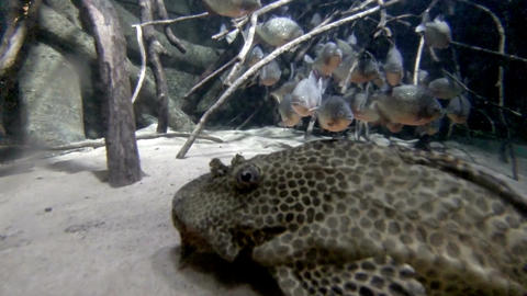 Sea life in aquarium 6 Stock Video Footage