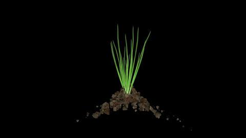 explosion stone & grass,quarry blasting Stock Video Footage