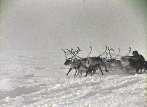 Reindeer team. Newsreel of the USSR Footage