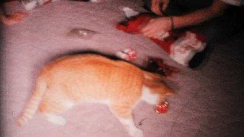 Cat Plays With Christmas Ornament 1967 Vintage 8mm film Stock Video Footage