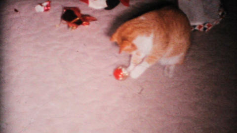 Cat Plays With Christmas Ornament 1967 Vintage 8mm Film stock footage