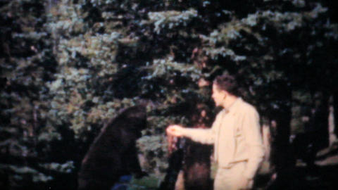 Feeding Cute Bear Cubs In A Park 1958 Vintage 8mm film Stock Video Footage