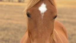 Close Up of a Horse Looking at the Camera Stock Video Footage