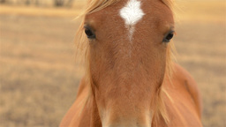 Close Up Of A Horse Looking At The Camera stock footage