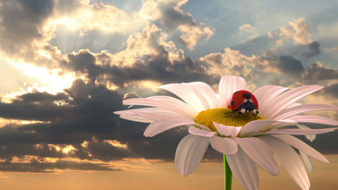 grassy hill with chamomile and ladybird Animation