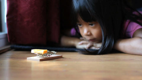 Girl Using A Mousetrap Stock Video Footage