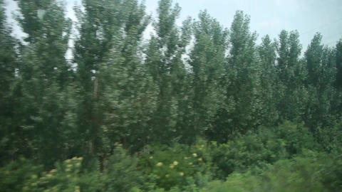 Dense green woods forest in rural countryside.Speeding... Stock Video Footage