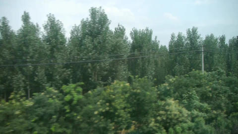 Dense green woods forest in rural countryside.Speeding train travel,scenery outs Footage