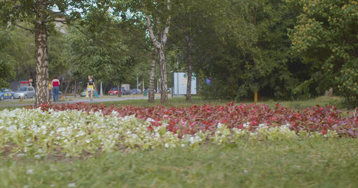 Flower bed in the park Footage