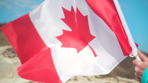 Male hand holding a flag of Canada. The flag of Canada develops in the wind Live Action