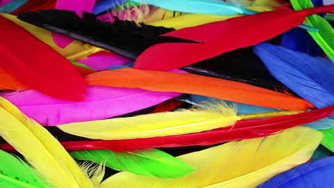 Colorful bird feather in rainbow colors Footage