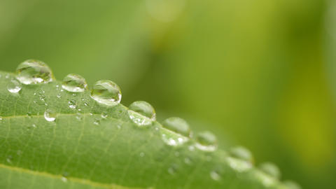 Close up of dew on leaves with blurred green nature background Footage
