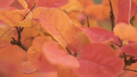 Real Time Leaves On The Wind, Autumn Season Footage