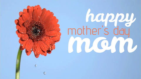 Mothers day with flower Animation