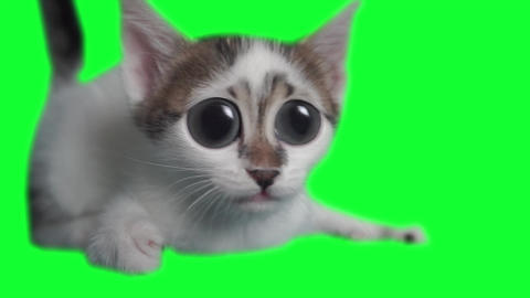 Isolated cat with funny big eyes Loop animation. Comic curious kitten in green screen, alpha channel Footage