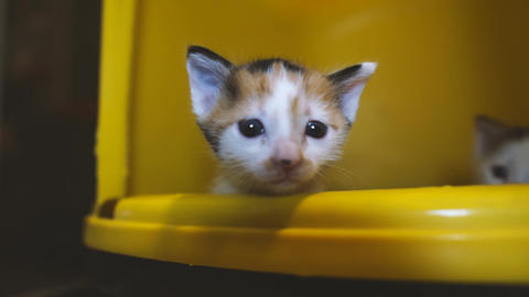 Kittens in a yellow box, cute baby cat Footage