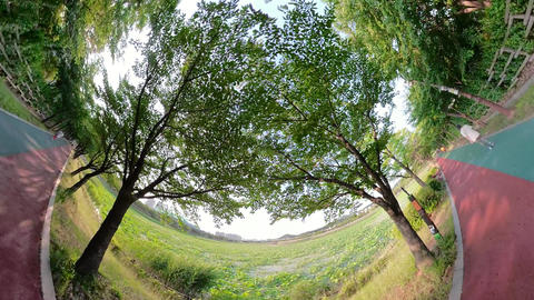 Little Planet View of Pathway in Ansan Hwarang Recreation Area 03 Live Action