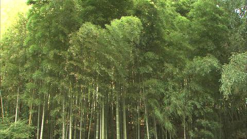 森林 ライブ動画
